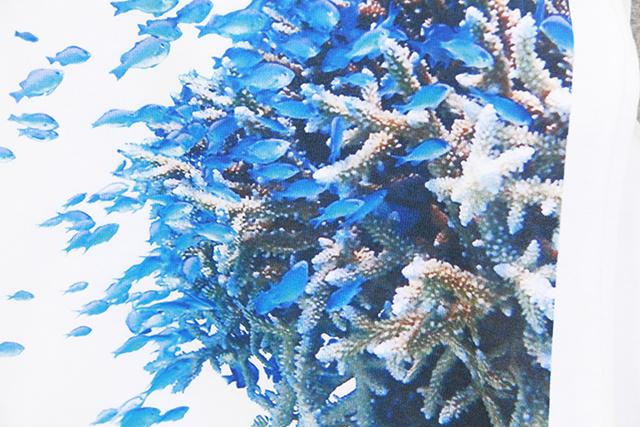 Coralfish in Kerama