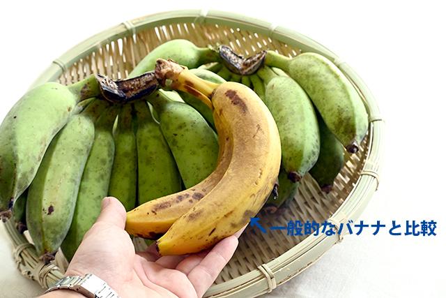 もちっ娘バナナ